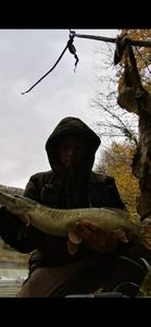 Northern Pike — Kevin Rslt
