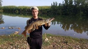 Northern Pike — Maxime Nyrd