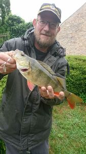 European Perch — Brousse  Anthony