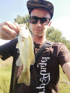 Largemouth Bass — Nicola Visentin