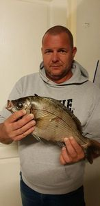 Black Seabream — michael mercier