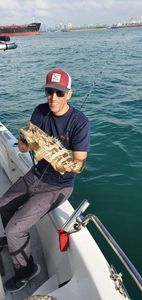 Orange Spotted Grouper — Karim Saada