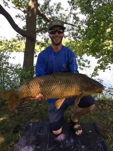 Common Carp — Zak Prenger
