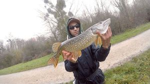 Northern Pike — Robin Leurriste