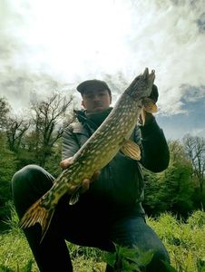 Northern Pike — Matthieu Latouille