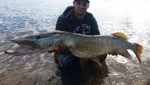 Northern Pike — Denver Dinow's