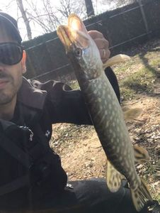 Northern Pike — Jose Da Silva