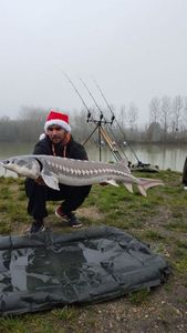 Atlantic Sturgeon — Mathias Delandre