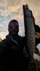 Northern Pike — Tid Rising