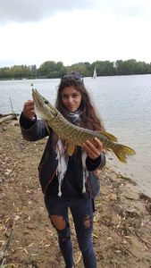 Northern Pike — Elodie Petit