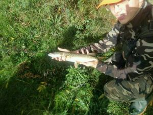 Northern Pike — Kr Fishing
