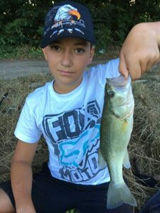Smallmouth Bass — Natan Ailloud Buthion