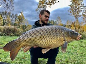 Common Carp — Tanguy Demule