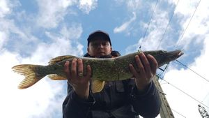 Northern Pike — Vincent MonkeyFishing