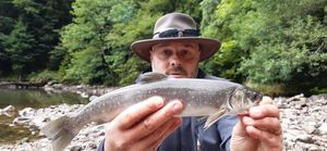 Whitespotted Char — Bruno Hedouin