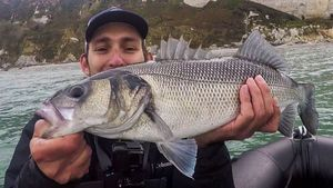 European Bass — Fishing For You