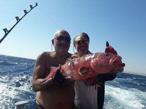 African Red Snapper — Willy Lafon