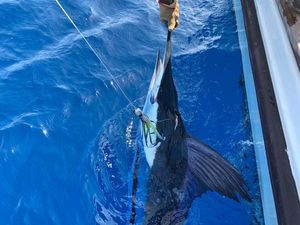 White Marlin — Jean-Christophe Maire