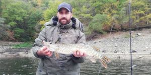 Northern Pike — Olivier Laguet