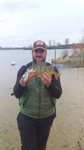 European Perch — Jeremy Guillon