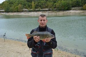 European Perch — Philippe Jardel
