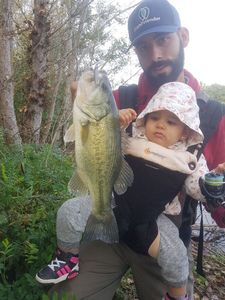 Largemouth Bass — Julien  DE LA VEGA