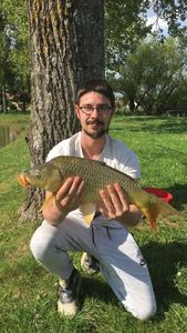 Common Carp — Qkentin Guillory