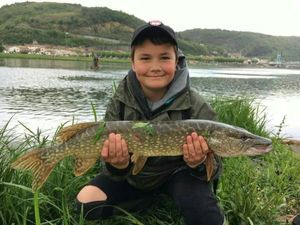 Northern Pike — Nolan Ailloud-Buthion
