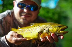 Brown Trout — Cautis Tiberius