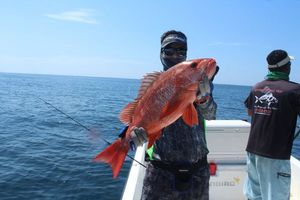 African Red Snapper — Niels Peters