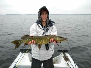 Northern Pike — Gregory Meytadier
