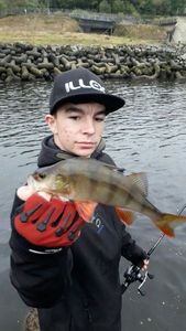 European Perch — Youen Guesdon ( chaine youtube le schtroumpff fishing)
