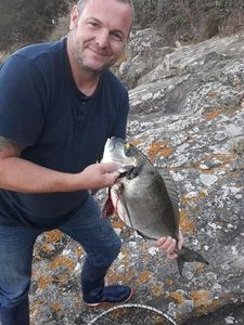 Gilthead Seabream — michael mercier