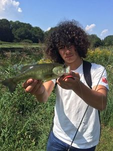 Largemouth Bass — Pierre Pioda