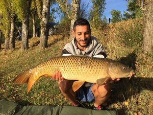 Common Carp — Najim Ben Mohamed