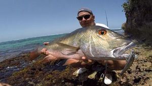Mutton Snapper — Alexandre Godefroy