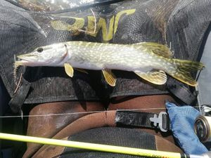 Northern Pike — Jean Luc Thomas