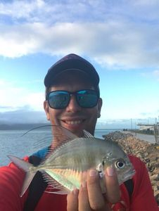 White Trevally (Silvery) — Julien Perol