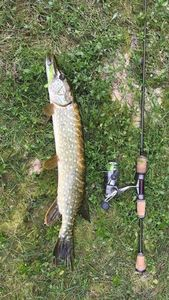 Northern Pike — Tom Cermet