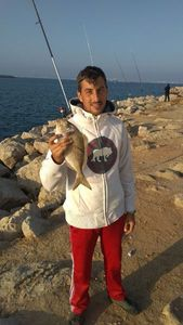 Gilthead Seabream — Samuel Garay