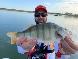 European Perch — Joel Girard (youtube : Joel G Peche)