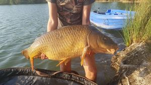 Common Carp — Evan Contacolli