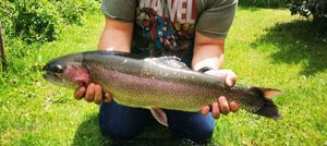 Rainbow Trout — Stephane Leurriste
