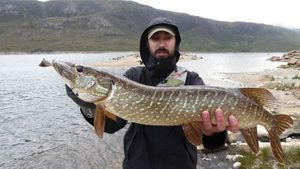 Northern Pike — Pierre Paris