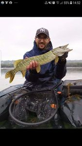 Northern Pike — Julien Barbier