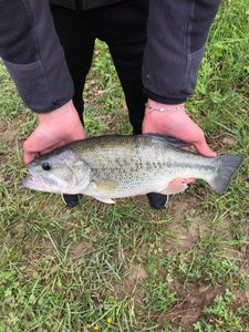 Smallmouth Bass — pescaïre sud