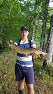 Northern Pike — Maxence Boucheron