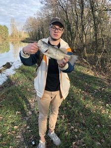 Largemouth Bass — Lucas Parodi