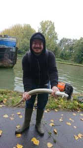 European Eel (Common Eel) — Julien Vanderkam
