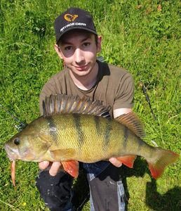 European Perch — Laurent Bourdoux
